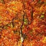 Ideas de decoración para cumpleaños en otoño